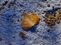 Лист на новом снеге на гравии стоковое изображение