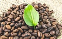 Лист на предпосылке кофейных зерен Стоковые Изображения RF