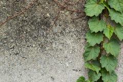 Лист на старой стене Стоковая Фотография RF