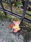 Лист на улице Стоковое Изображение