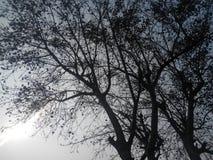 Лист неба стоковые изображения rf