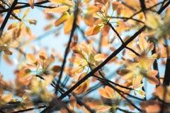 Лист, небо, предпосылка, ветвь и лист на предпосылке голубого неба стоковая фотография rf