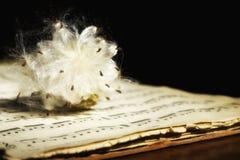 лист нот цветка Стоковая Фотография