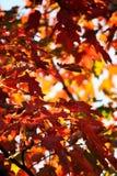Лист оранжевого дерева в осени стоковое фото rf