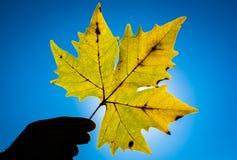 Лист осени в солнце Стоковые Изображения