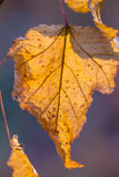 Лист осени в солнце Стоковые Фотографии RF