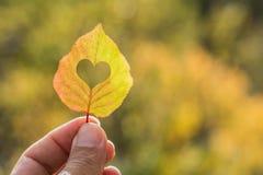 лист осени желтые в руке стоковая фотография
