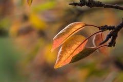 Лист осени на дереве стоковые изображения rf