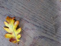 Лист осени на деревянной предпосылке Стоковые Фотографии RF
