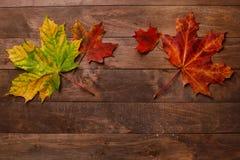 Лист осени на деревянной предпосылке Стоковое Изображение RF
