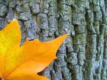 Лист осени на предпосылке ствола дерева Стоковые Изображения