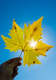 Лист осени против солнца Стоковые Изображения