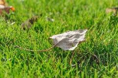 Лист осени упаденные от дерева на зеленой траве Стоковые Изображения RF