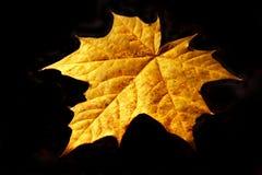 лист осени Стоковые Изображения RF