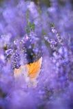 Лист осени Стоковое Изображение
