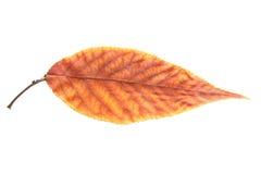 Лист осени Стоковые Изображения