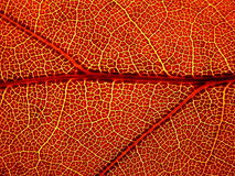 лист осени Стоковая Фотография RF