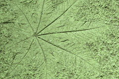 Лист отпечатка на предпосылке пола цемента, земном backg текстуры Стоковые Фотографии RF