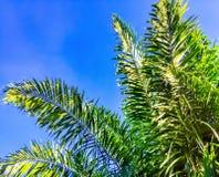Лист пальмы с голубым небом стоковое фото rf