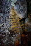 Лист папоротника в осени Стоковое фото RF