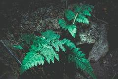 Лист папоротника стоковое фото rf