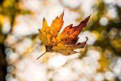 Лист падая от дерева захваченного на камере Стоковые Изображения