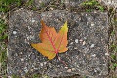 Лист падения лежа на дороге Стоковое Изображение