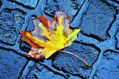 Лист падения осени Стоковые Фото