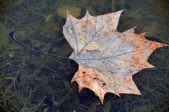 Лист падения Стоковые Изображения RF