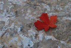 Лист падения Стоковое Фото