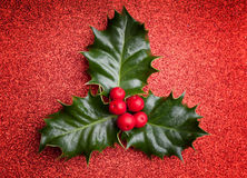 Лист падуба рождества с красными ягодами Стоковые Изображения