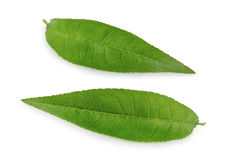 Лист персика изолированные на белой предпосылке Стоковое Фото
