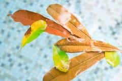 Лист плавая на бассейн окруженный мимо сортировали другие листья справедливо вдоль стороны на поверхности Сезоны приходят и идут  Стоковое Изображение RF