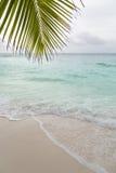 Лист пляжа и ладони, Ла Digue, Сейшельские островы Стоковое Изображение RF