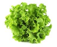 Лист салата изолированная предпосылкой белизна студии макроса салата стоковое фото rf