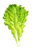 Лист салата стоковое изображение