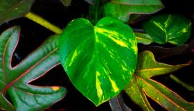 Лист сердца форменные в саде Стоковое фото RF