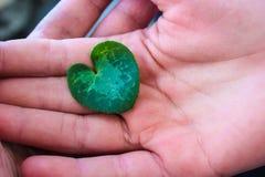 Лист сердца Стоковые Изображения RF