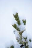 Лист сосенки в снежке Стоковая Фотография RF