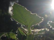 Лист с падениями росы Стоковые Фото