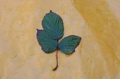 Лист с славным цветом Стоковое Фото