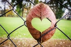 Лист с формой сердца стоковое фото