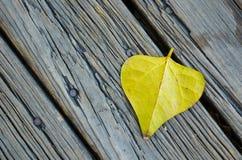 Лист тополя Стоковое Изображение