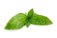Лист травы базилика Стоковые Фото