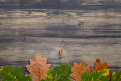 Лист дуба на черной деревянной предпосылке Стоковые Изображения