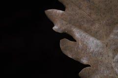 Лист дуба Стоковое Изображение RF