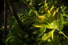 Лист упаденные зеленым цветом Стоковые Изображения