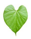 Лист формы сердца, изолированные на белизне Стоковая Фотография