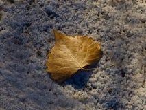 Лист хлопока Брауна на снеге стоковая фотография rf
