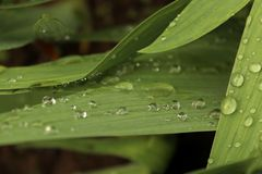 Лист цветка после дождя Стоковое фото RF